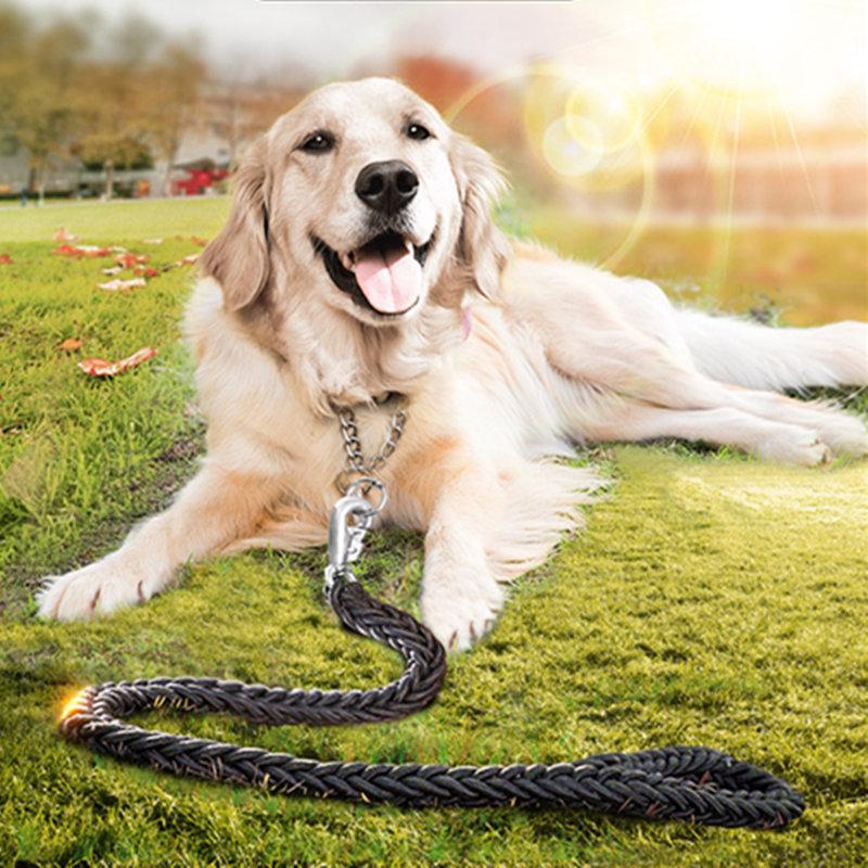 hvordan tog golden retriever hunde, hvordan tog gyldne retri